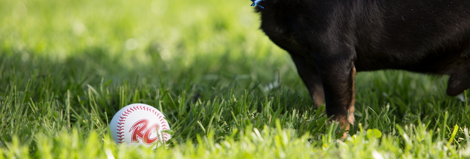 Dog with Rivercats ball