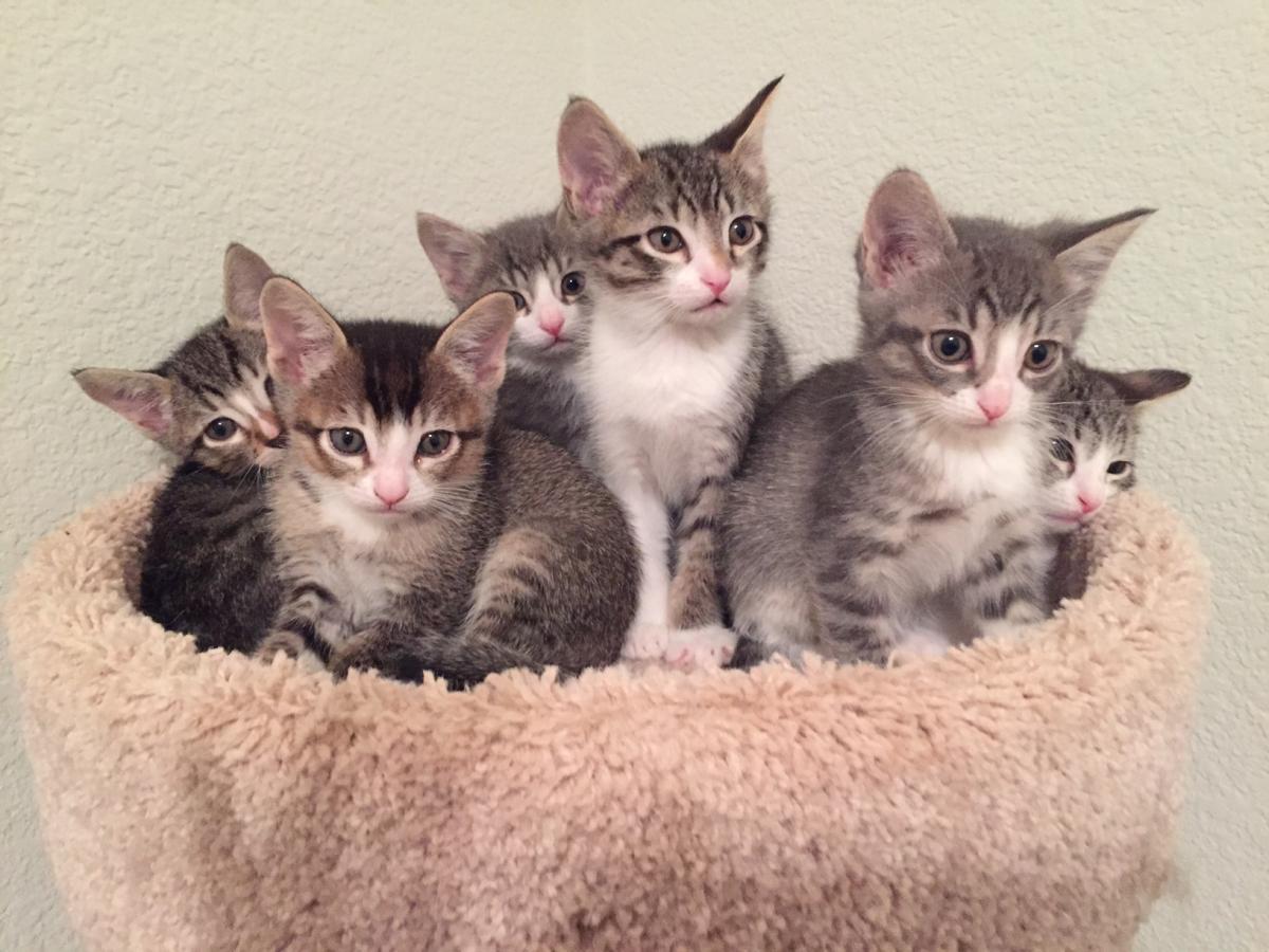 What Do I do if I Find a Litter of Kittens Sacramento SPCA