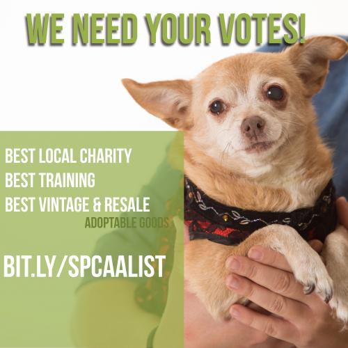 Vote for the Sacramento SPCA in the A List: bit.ly/spcaalist