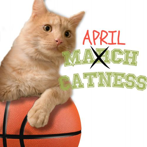 April Catness