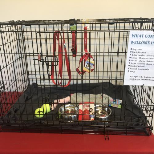 Dog Crate filled with toys and other items