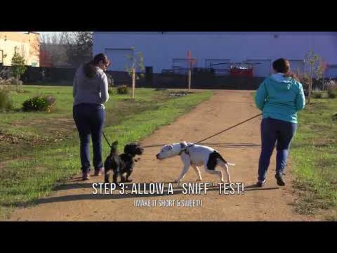 Sacramento Spca Dog Training Classes