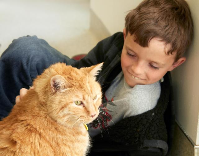 Little boy with cat