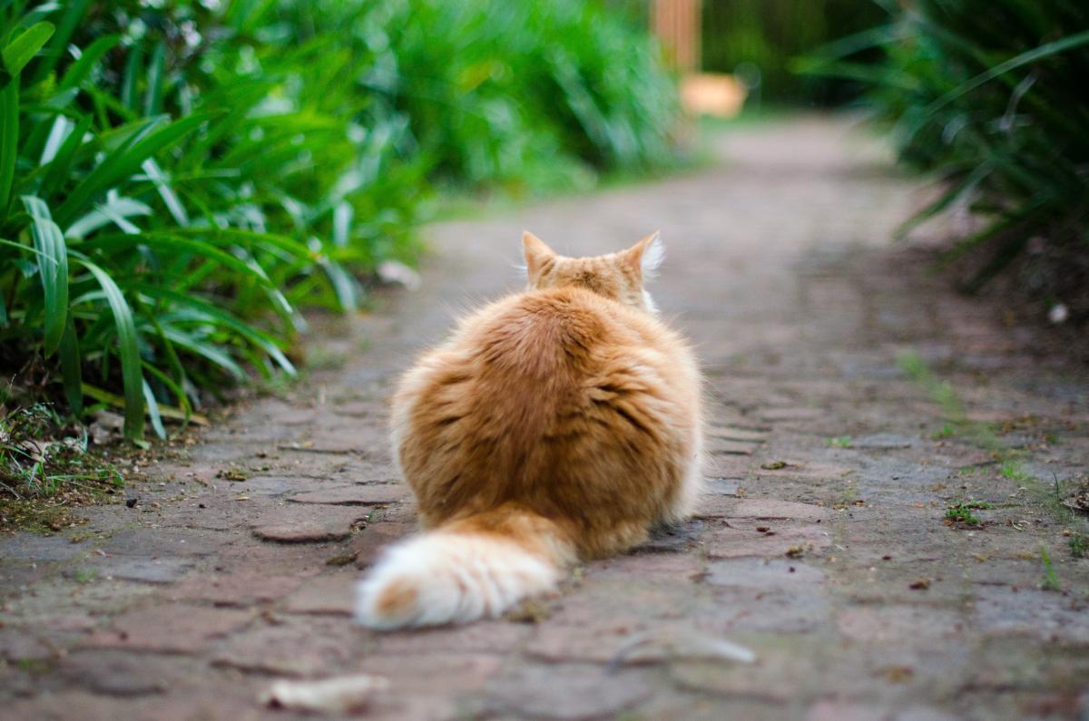 Cat Sitting On Walkway