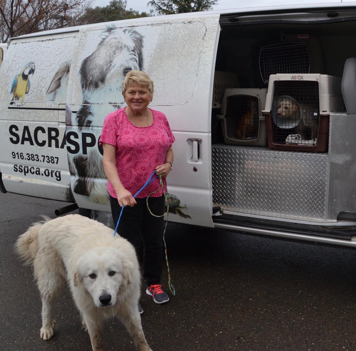 7a4bbe5558 Did you know the Sacramento SPCA has a robust transfer program  Since 2016