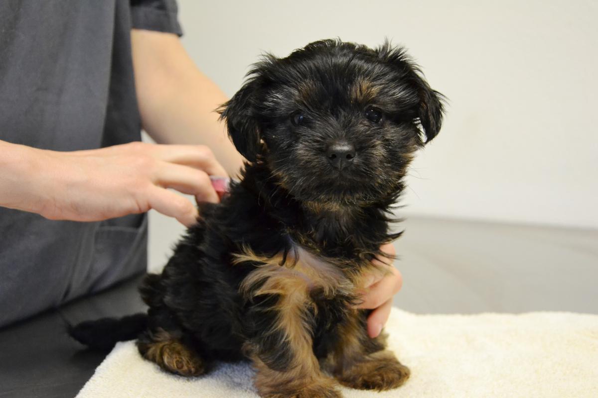 Sacramento Spca Dogs For Adoption
