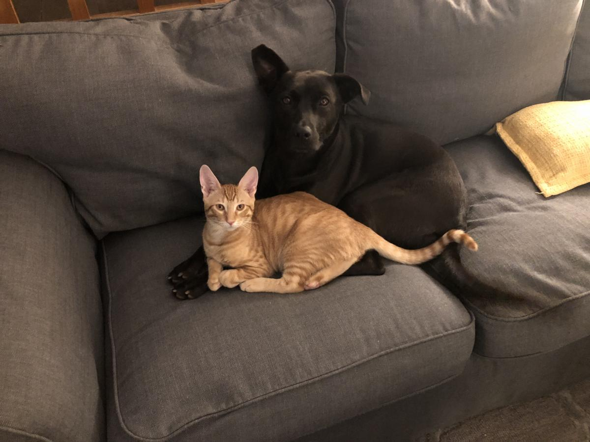 introducing a new dog to a cat introducing kitten to dog introducing cat to dog introducing dog to cat introducing cats and dogs introducing a puppy to a cat introducing a dog to a cat home best way to introduce a dog to a cat introducing new cat to dog introducing dog to kitten introducing cat to puppy introducing new puppy to cat bringing a kitten home to a dog introducing a puppy to a cat household introducing new kitten to dog best way to introduce a cat to a dog introducing a puppy to a timid cat introducing cats to a new dog best way to introduce cats and dogs best way to introduce kitten to dog introducing a puppy to your cat introducing a new puppy to your cat introducing your cat to a new dog integrating cats and dogs introducing a puppy to an older cat introducing cat to new puppy introducing your dog to a cat introducing a new dog to your cat introducing a new cat to your dog best way to introduce dogs and cats best way to introduce a cat and dog best way to introduce a puppy to a cat introducing puppy to kitten introducing your cat to a new puppy old cat new puppy introducing a cat to a dog home introducing my cat to a new dog kitten and dog introduction introducing dog to new cat introducing a kitten to a puppy cats and puppies getting along introducing your dog to a kitten best way to introduce a dog and cat introducing dog to new kitten introducing your puppy to your cat introducing a cat and a dog introducing cat and puppy introducing a new kitten to your dog tips for introducing cats to dogs introducing your kitten to your dog introducing older cat to puppy introducing a kitten to your dog introducing my dog to a kitten best way to introduce puppy to cat introducing dog to a cat acclimating cats and dogs introducing new dog to cat in the home introducing a kitten to an older dog acclimating dogs to cats introducing my dog to a cat introducing new dog to resident cat introducing rescue dog to cats introducing your cat to a puppy bringing a puppy into