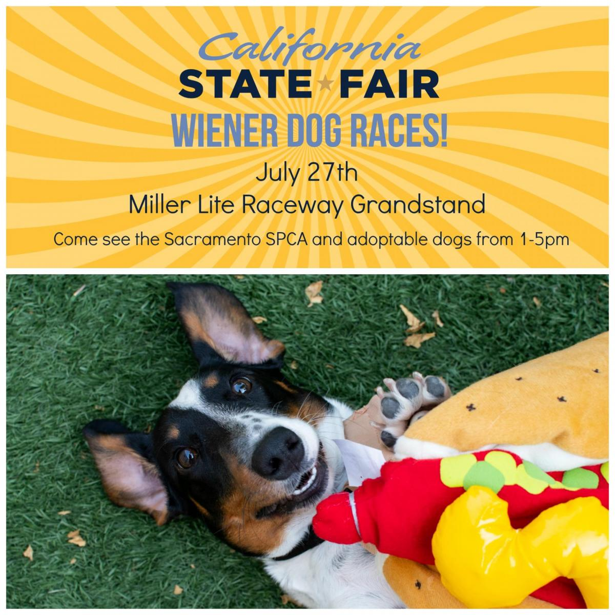 California State Fair Wiener Dog Races - Sacramento SPCA