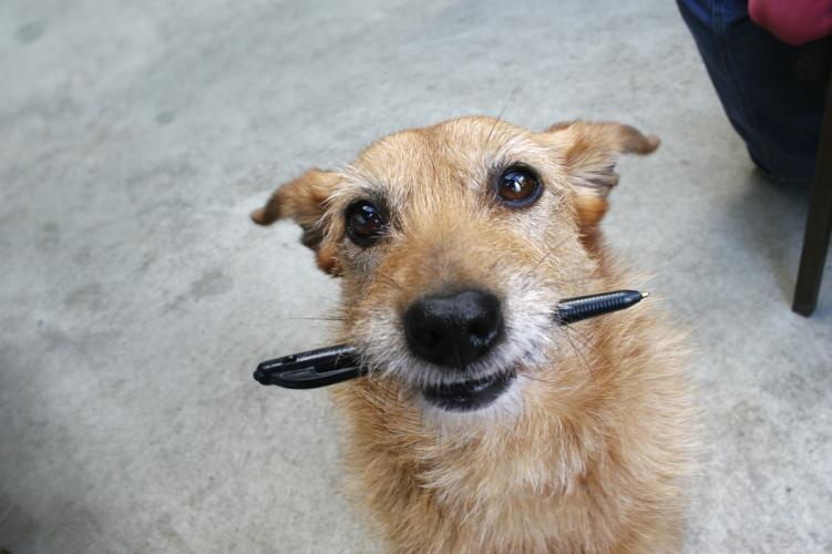Dog with Pen