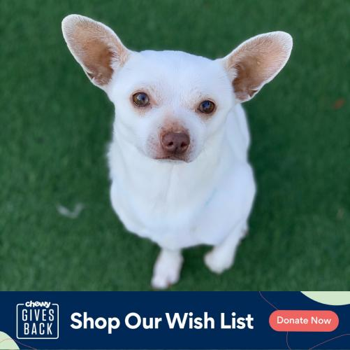 Click to visit our Chewy wishlist