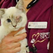 One eyed kitten being held by a veterinarian