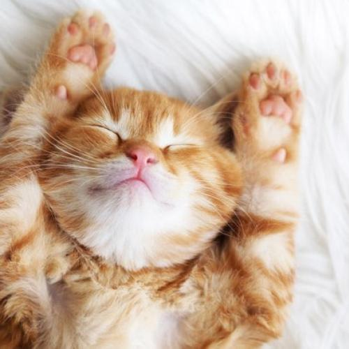 Sleepy happy kitten