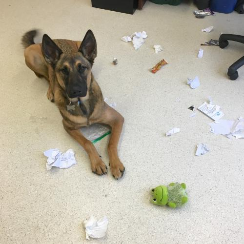 Dog surrounded by ripped up paper