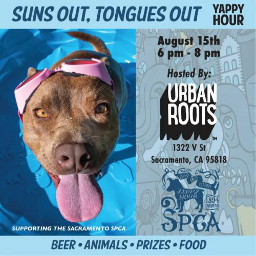 c1e8f778a9f Suns Out, Tongues Out Yappy Hour Urban Roots Brewing, Thursday, August  15th: 6-8pm
