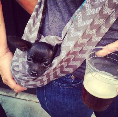 Dog in sling with beer