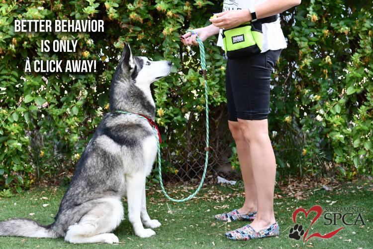 Behavior & Training - Sacramento SPCA